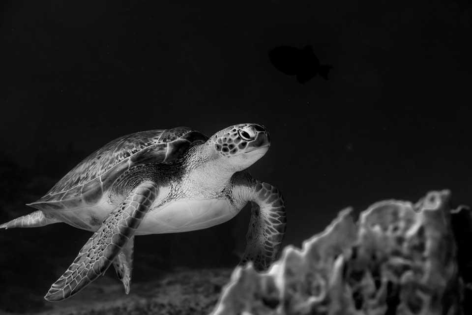 SDI Marine Eco Systems Awareness Diver